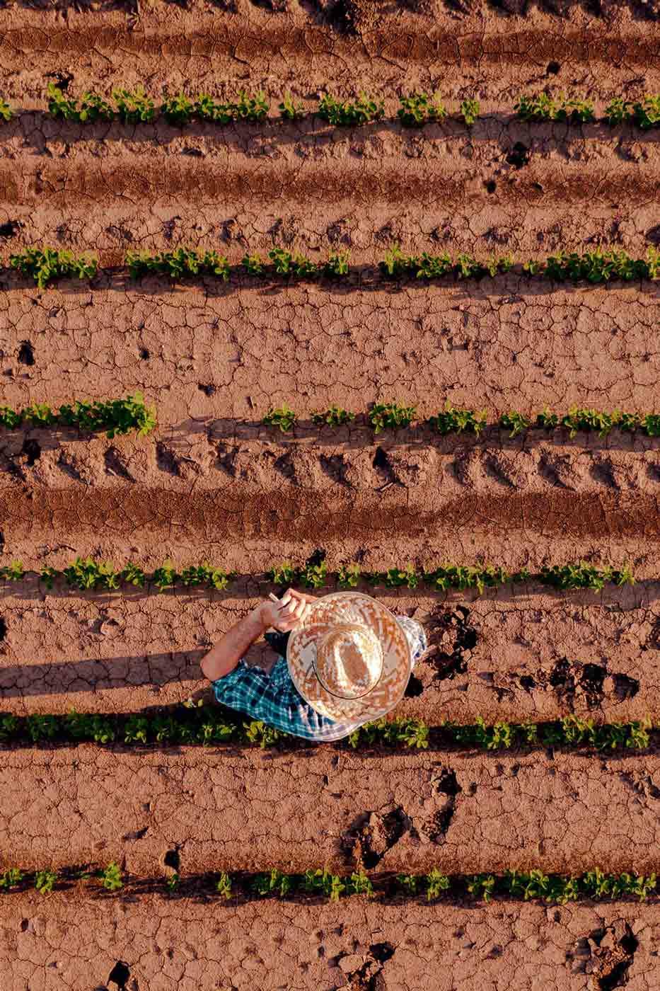 Agricoltura ad alta precisione