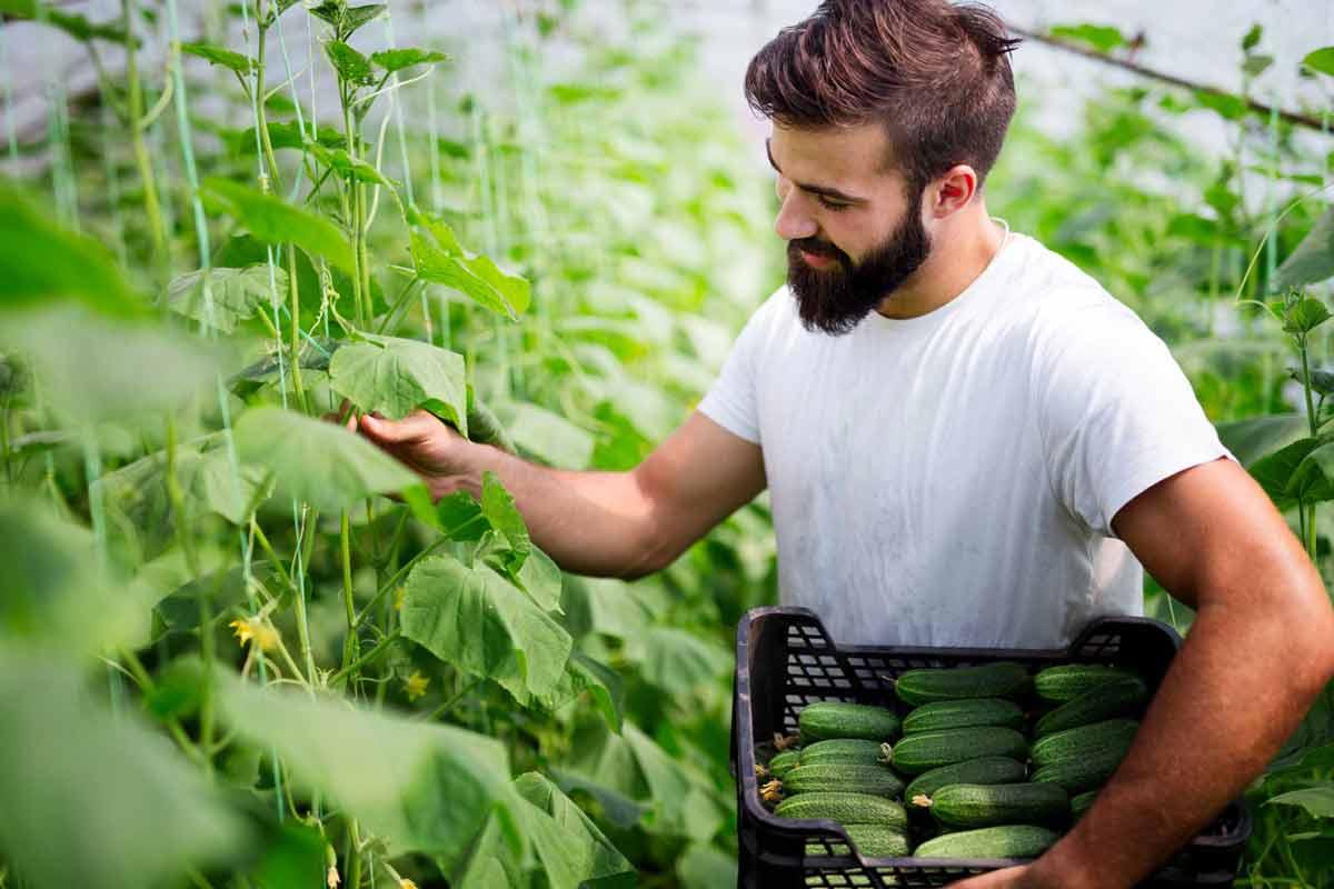 Agricoltura precisione